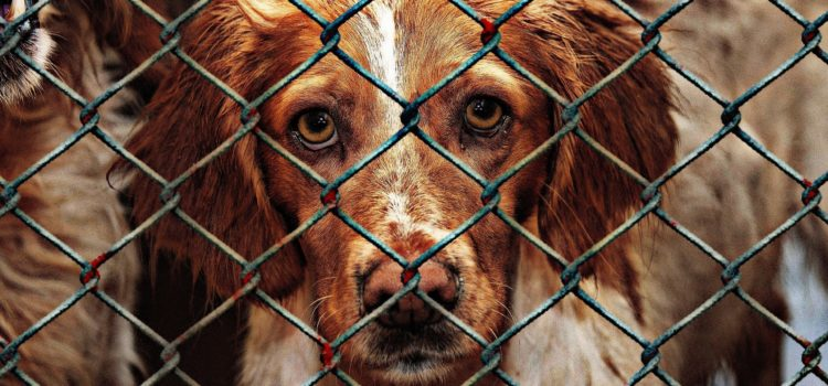 Images shows close up of dog behind chain link fence